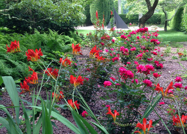 RED FLOWERING PERENNIALS