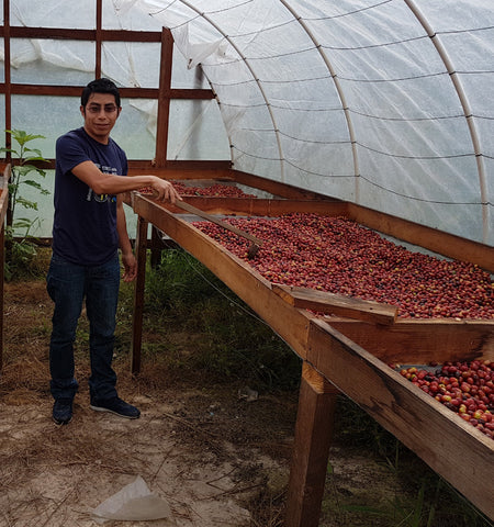 Honduras Finca Pacayal - Microlot, Fair Trade, Organic, Shade Grown