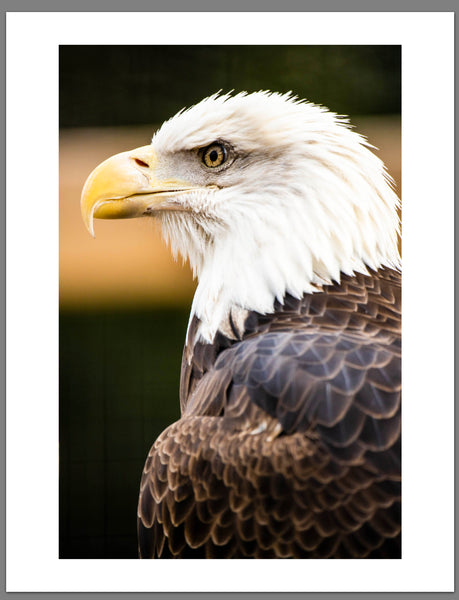 EAGLE Headshot 17x22 Limited Edition Art Print! Limited to only 10 - froknowsphoto