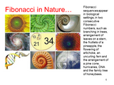 Fibonacci Tuners - Set of 8 - Gateway to Alternate Consciousness - SomaEnergetics Sound Tools & Training