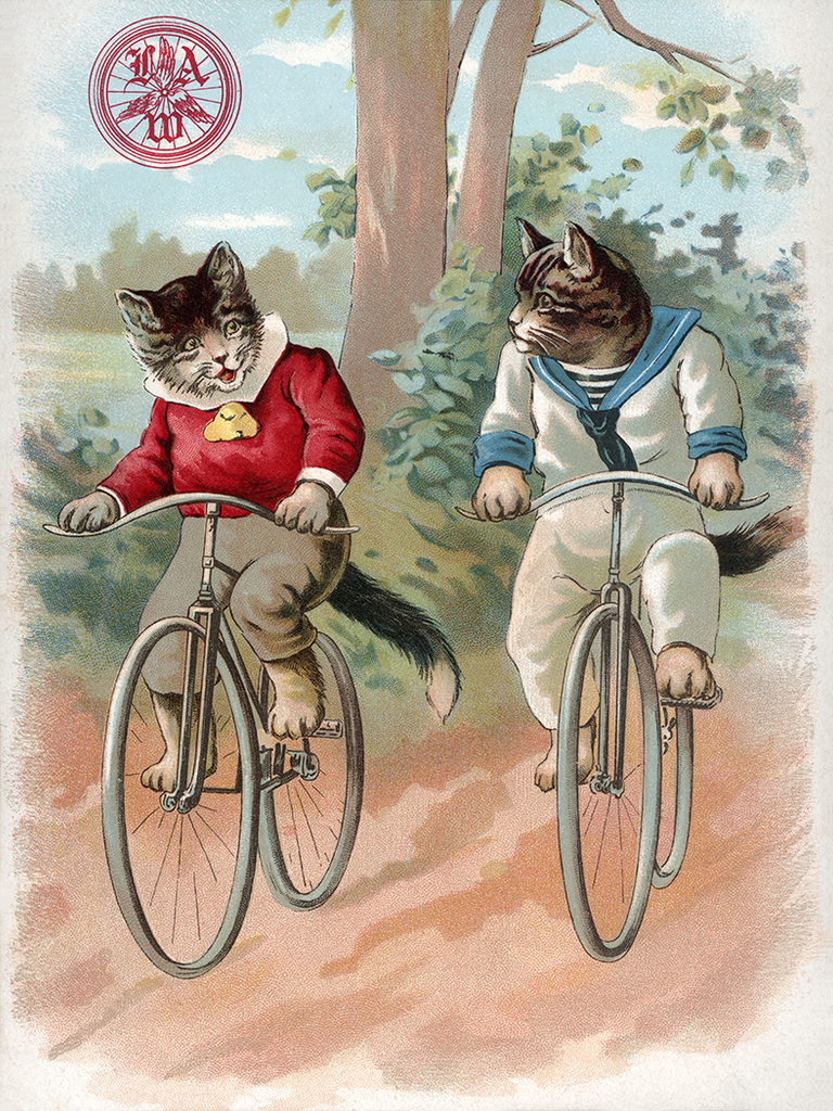 Cats - League of American Wheelmen Poster - MOLTENI CYCLING