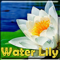 Water Lily - The Vapor Girl - eliquid / e juice