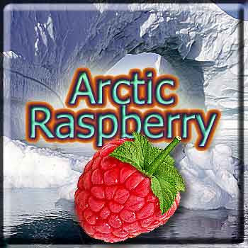 Arctic Raspberry - The Vapor Girl - eliquid / e juice