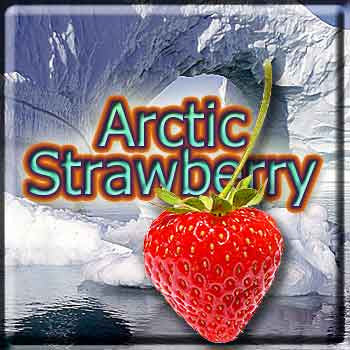 Arctic Strawberry - The Vapor Girl - eliquid / e juice