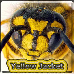 Yellow Jacket - The Vapor Girl - eliquid / e juice