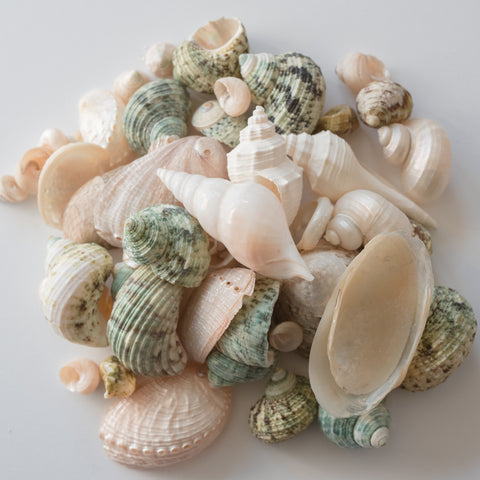Jade Seashell Mix