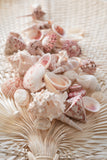 Blush Seashell Mix