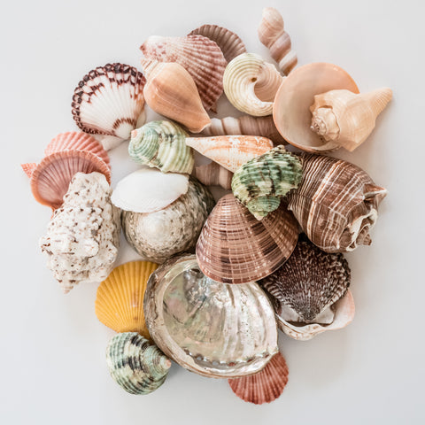 Natural Seashell Mix