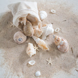 Caramel Seashell Mix