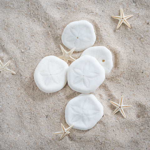 Set of Ten Sand Dollars