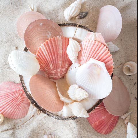 Limited Edition Moroccan Sands Seashell Mix