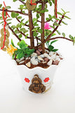 Jade : The Feng Shui Jade Live Plant- with Fengshui Lucky Coin with Lucky Ghungroo + CL Buddha Pot