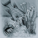 Hogfish Delight -  - Lithograph - Jim Barry Art - 1