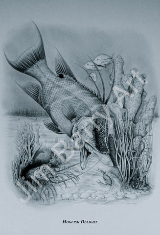 "Hogfish Delight - Small (12"" x 16"") - Lithograph - Jim Barry Art - 2"