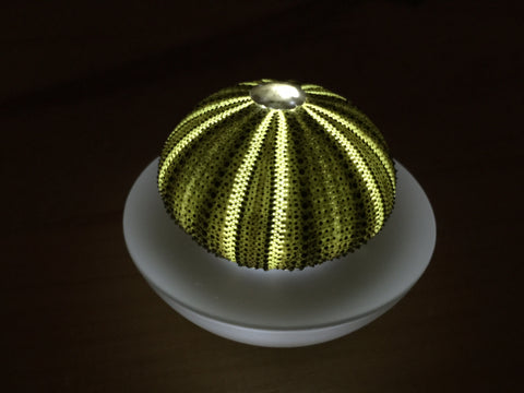 Green Sea Urchin Flameless Sealight Candle.