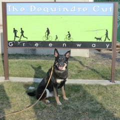 Taking Your Dog to the Dequindre Cut