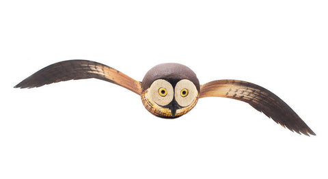 Flying Sawwhet Owl Flying