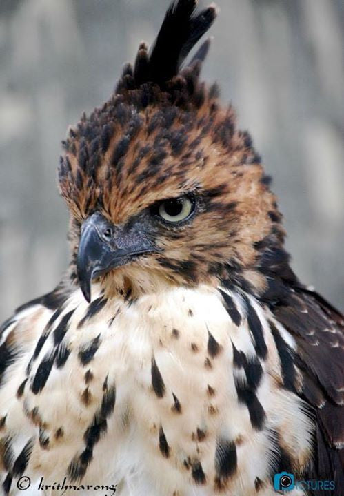 Hawk staring at someone