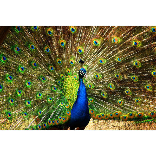 QLD-282 Diy Diamond Painting Peacock flaunting its tail Embroidery Decoration Fabric CrossStitch Handicraft Craft 60x90cm - Hespirides Gifts