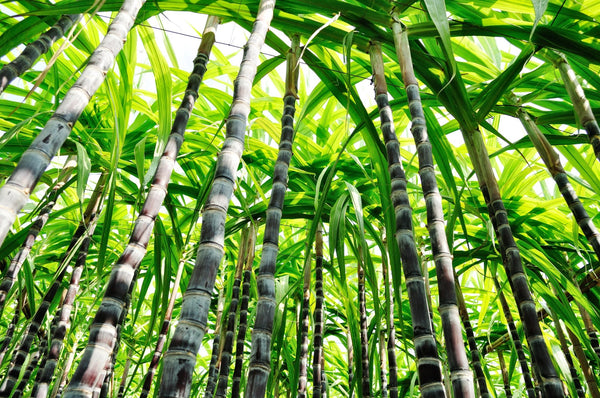 We are replacing 95% of all current plastic packaging with sustainable sugarcane BIO-Plastics! | Soleil Toujours