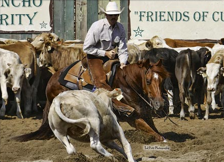 Andrew Coates Cutting horses