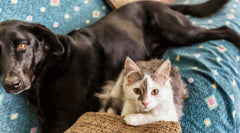 Dog and Kitten on Couch