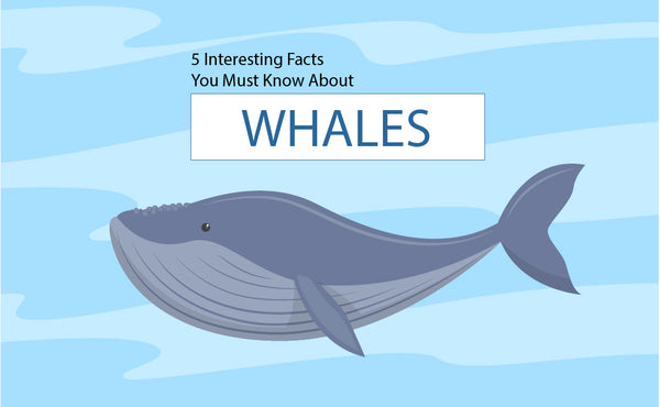 5 Interesting Facts You Must Know about Whales