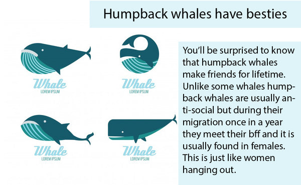 Humpback whales have besties