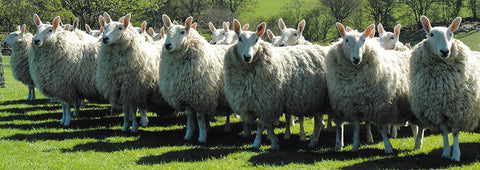 You can trace our wool to only the best farmed sources