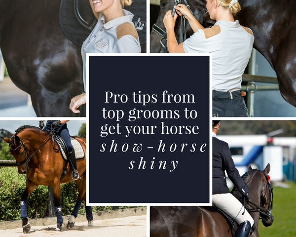 Pro Tips to get your coats show-ring shiny.