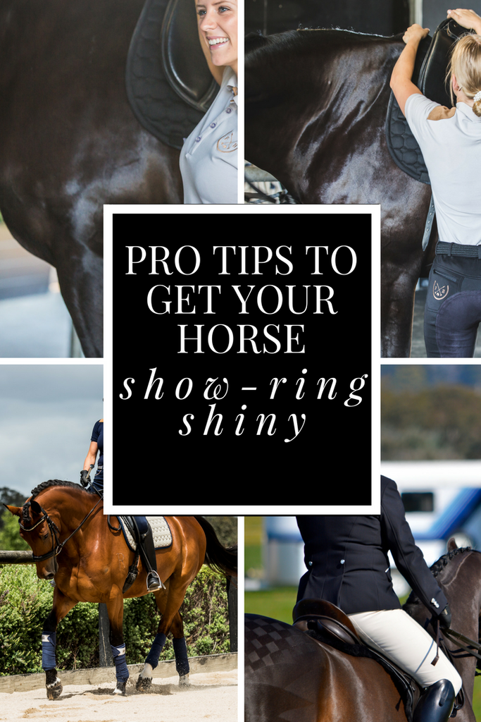 Grooms tips for horse show shiny coat