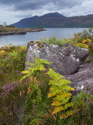 The mountain Beinn Airigh Charr and Loch Maree in Wester Ross, Scotland with colourful ferns in the foreground