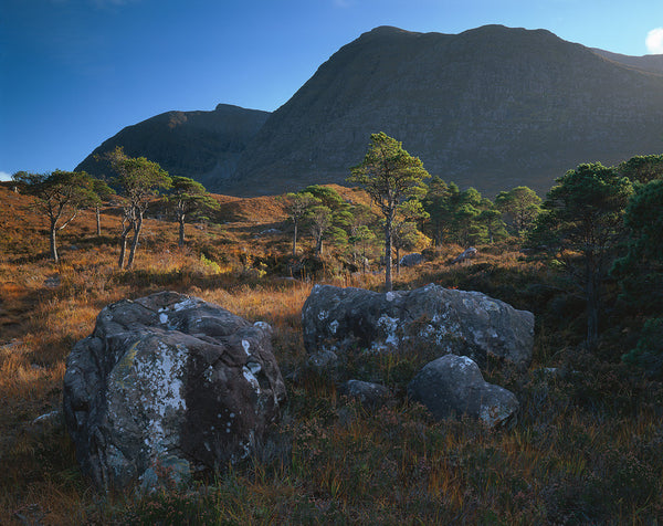 beinn damh mountain in torridon and scots pine trees
