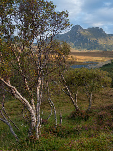 Late evening light on Ben Loyal mountain, birch trees and Lochan Hakel in Sutherland, Scotland, UK