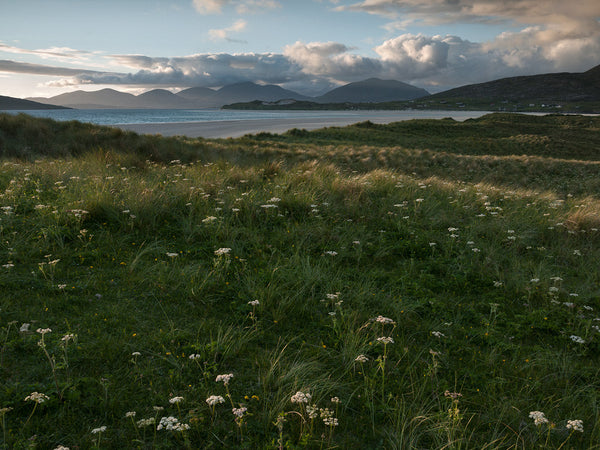Machair on Traigh Seilebost beach Isle of Harris Outer Hebrides