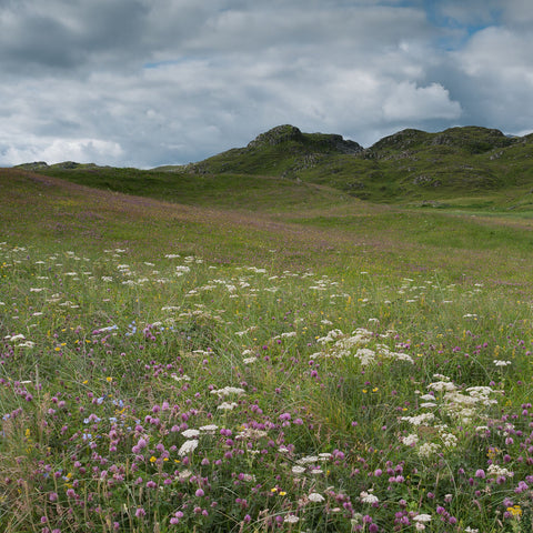 Field of machair at Traigh na Beirigh on the Isle of Lewis Outer Hebrides