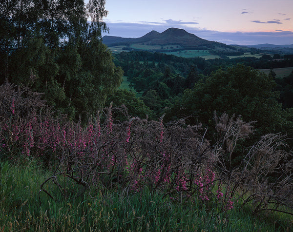 scott's view in the scottish borders and foxgloves