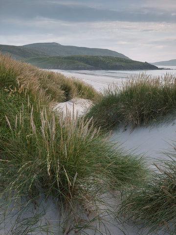 Dune Grass on Traigh Eais beach Isle of Barra Outer Hebrides