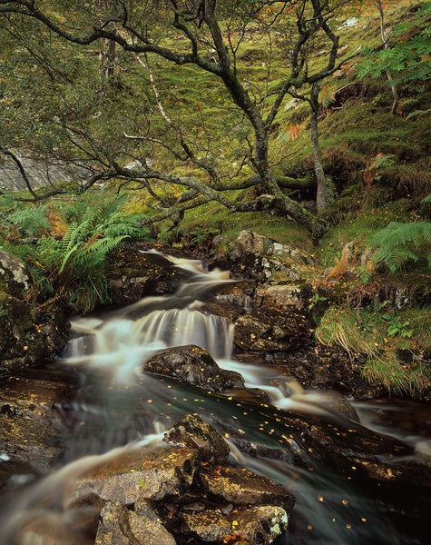 River in the Yarrow Valley, Scottish Borders
