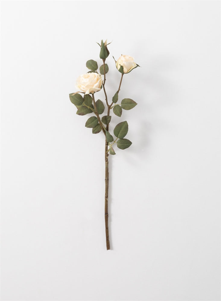 Rose Stem - Cream
