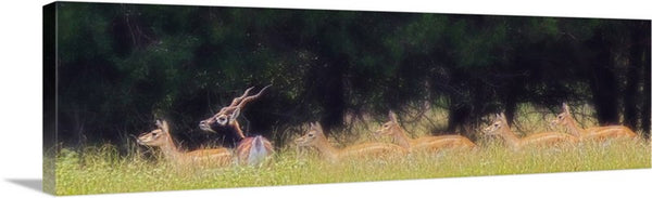A Buck and a Show Canvas Print