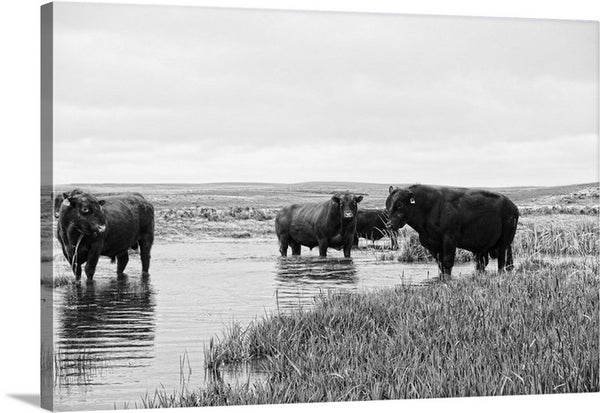 After Breeding Season Canvas Print