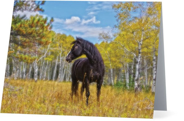 Aspen Gold in Black and White Note Cards and Greeting Cards (12 Pack)