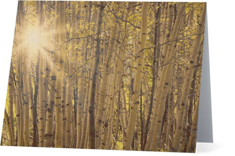 Aspens in Summer Note Cards and Greeting Cards (25 Pack)