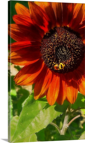 Autumn Sunflower and Bumble Bee Canvas Print