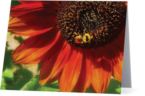 Autumn Sunflower and Bumble Bee Note Cards and Greeting Cards (25 Pack)