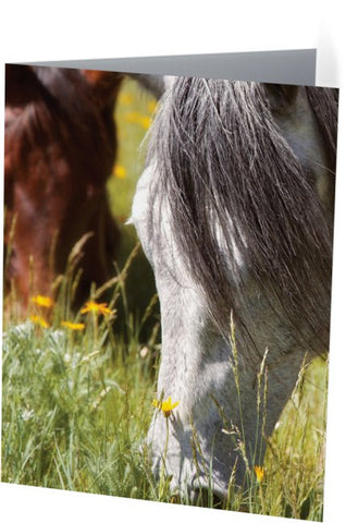 Autumn's Graze Note Cards and Greeting Cards (25 Pack)