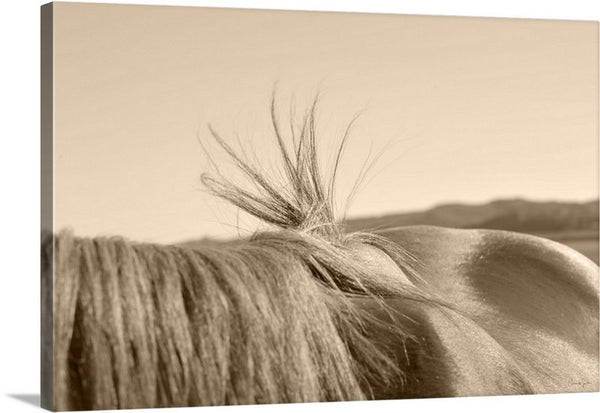 Bareback Hold Canvas Print