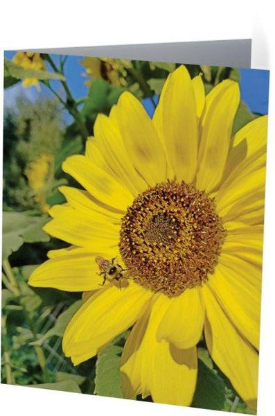 Bee-Dazzled Note Cards and Greeting Cards (25 Pack)