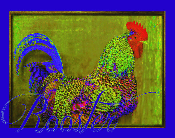 Bert the Rooster Canvas Print